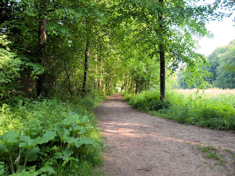 Boswandeling in Zuid Limburg